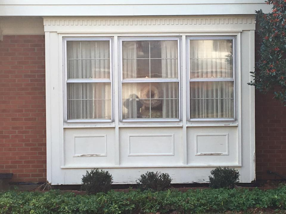 window cleaning experts delaware after